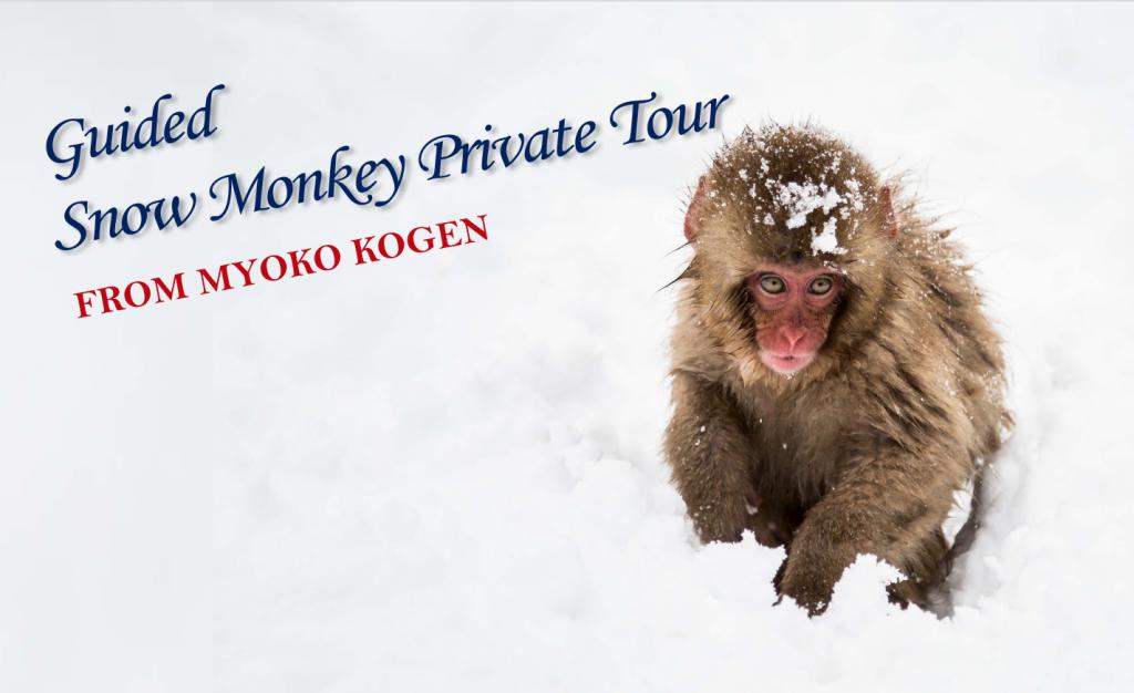 myoko private snow monkey tour