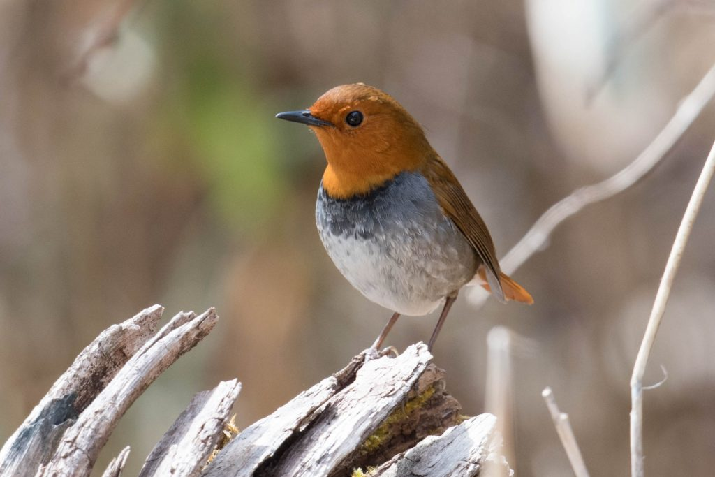 takayama-nature-bird