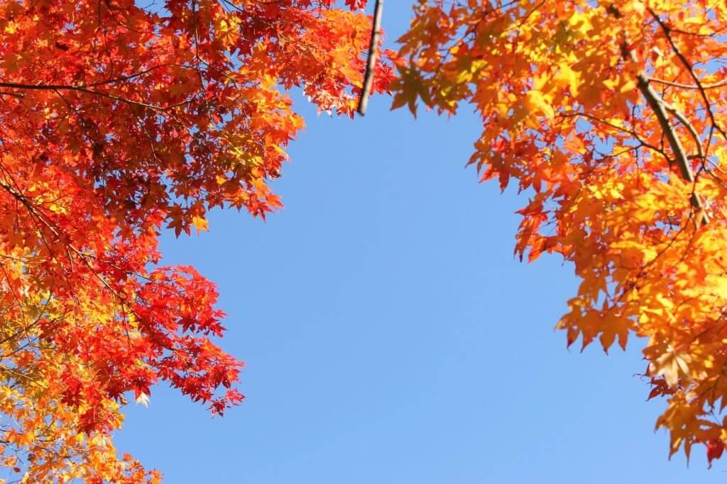 秋天的长野之美