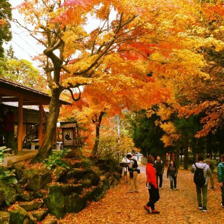 ENZA in autumn