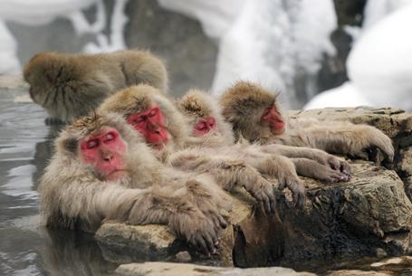 地獄谷雪猴公園