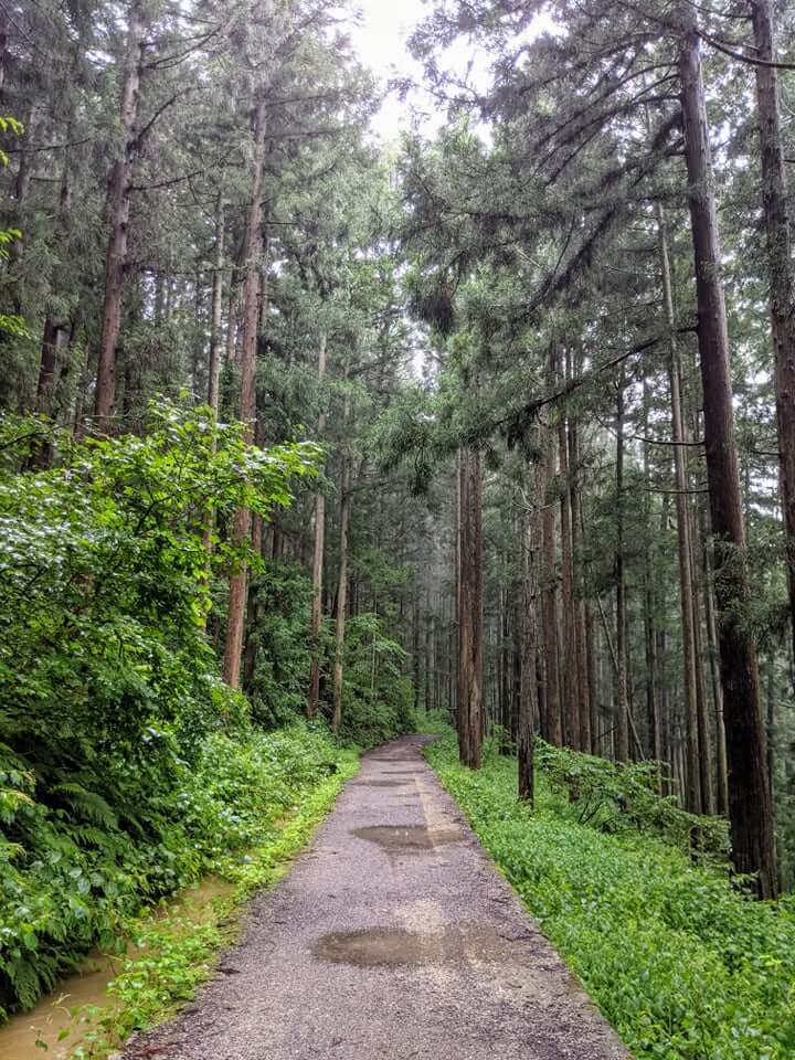 jigokudani-monkey-park-trail-green-season