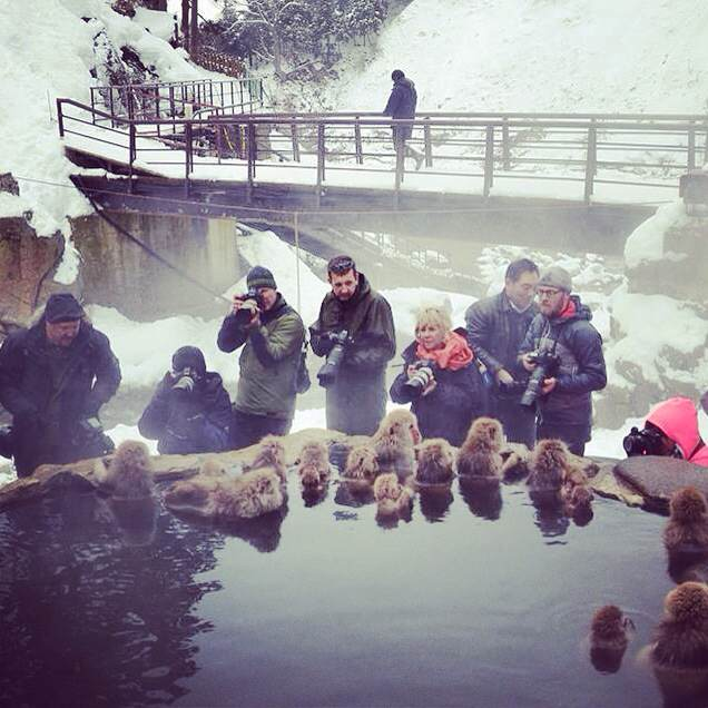 Snow monkey park in winter