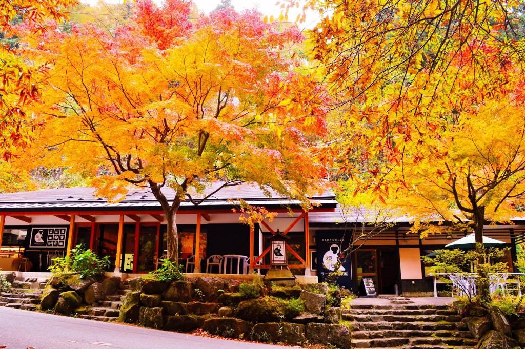 ENZA autumn