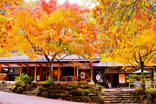 Enjoy the seasonal beauty of Nagano
