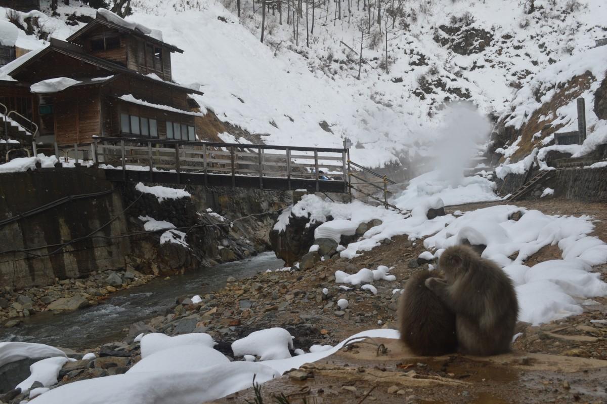 Close to monkey park, korakukan in winter