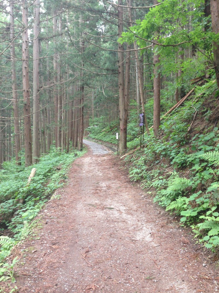 hike to snow monkey park in spring