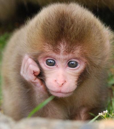 Photogenic snow monkey