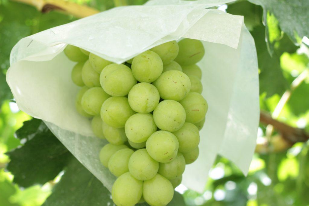 food-fruit-grapes