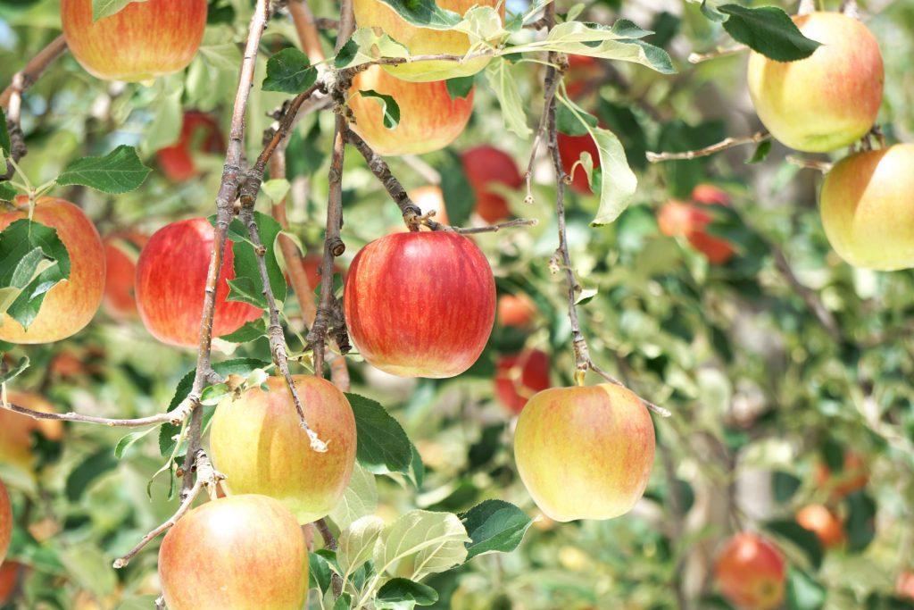food-fruit-apples