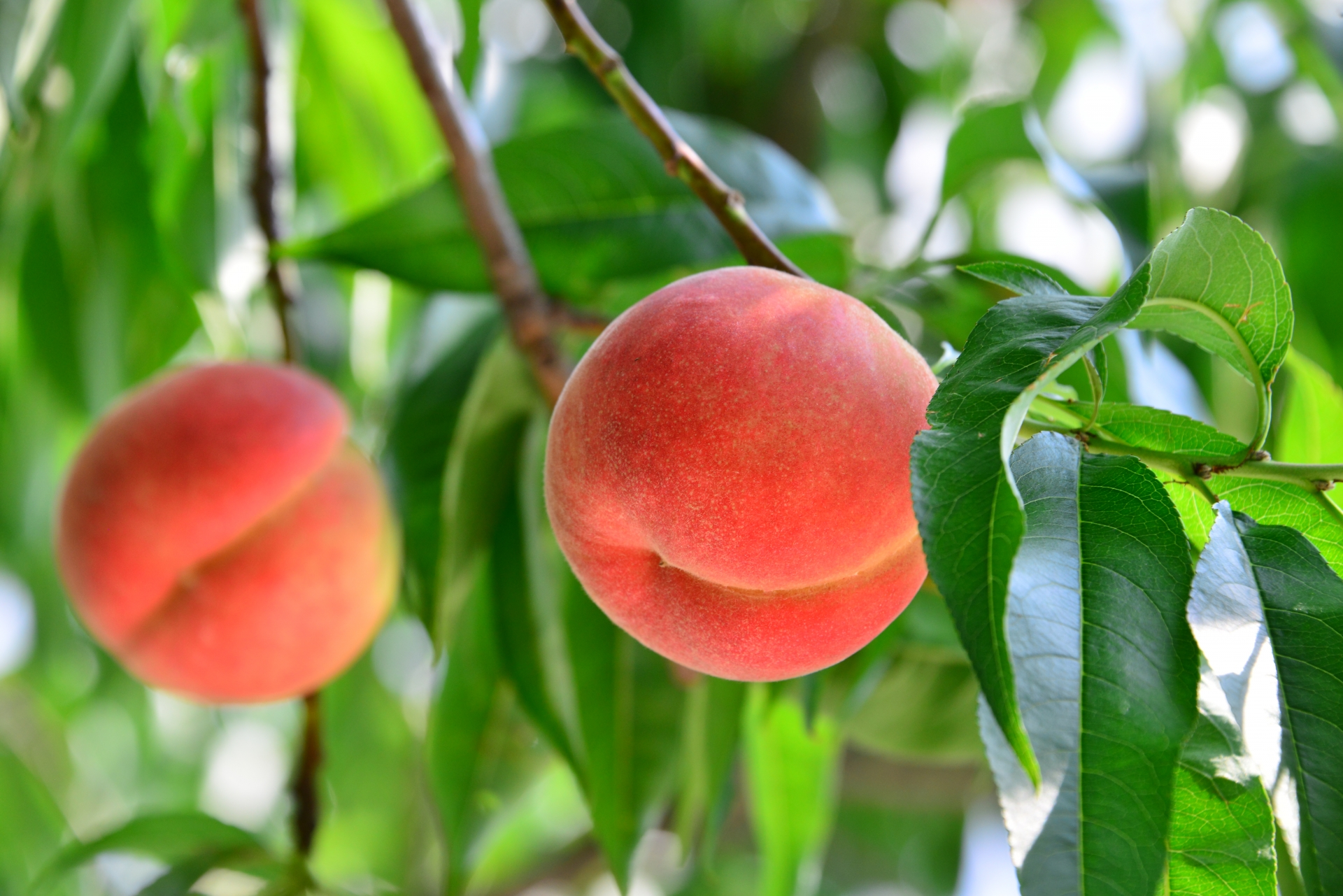 Enjoy Nagano's Delicious Fruit