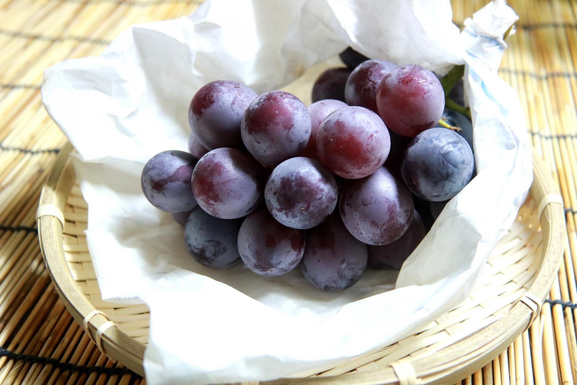 Enjoy the Fruit of Nagano
