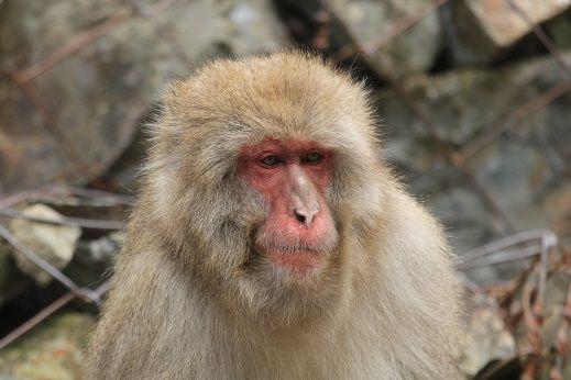Number 1 monkey