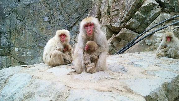 Number-1-monkey