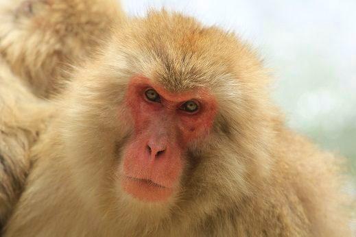 Number-2-Monkey