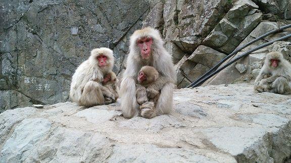 Number 2 monkey