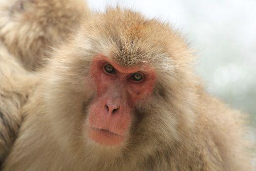 Number 3 monkey