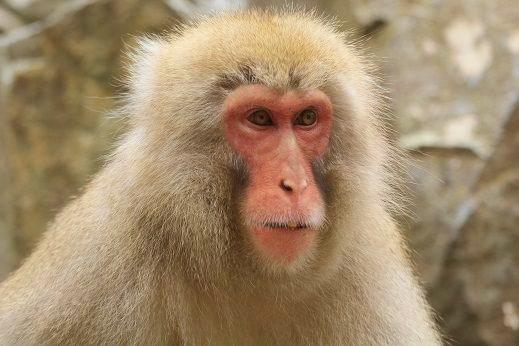 Number-3-monkey
