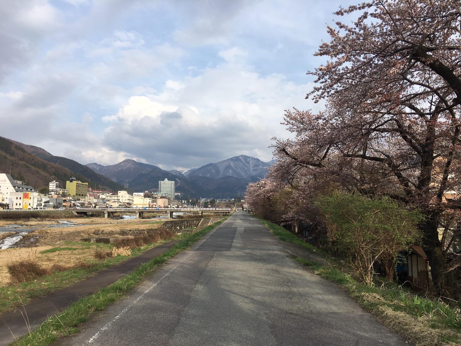 budding blossom trees