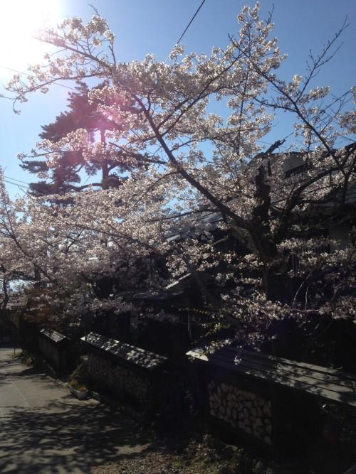kanbayashi blossom 2