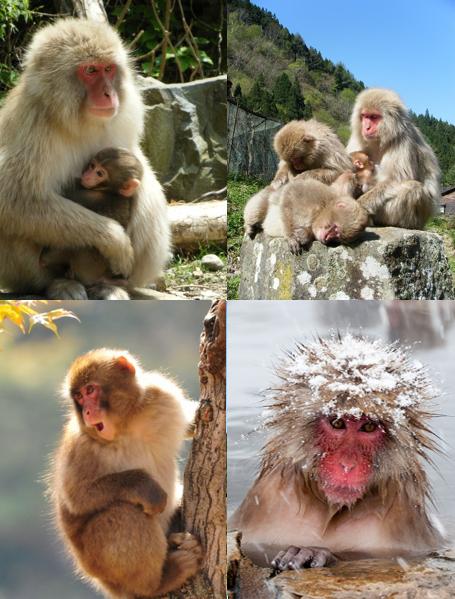 Season monkeys