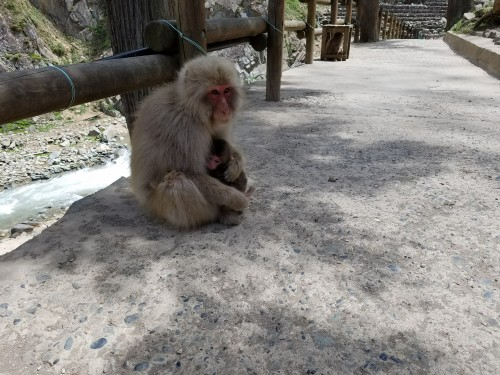 Snow Monkeys mom and baby 3