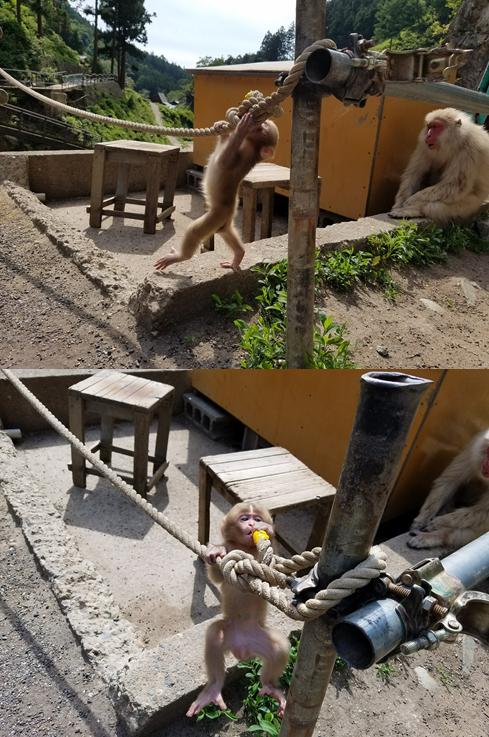 baby monkey climbing