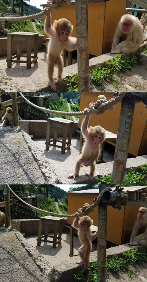 baby monkey playing with rope