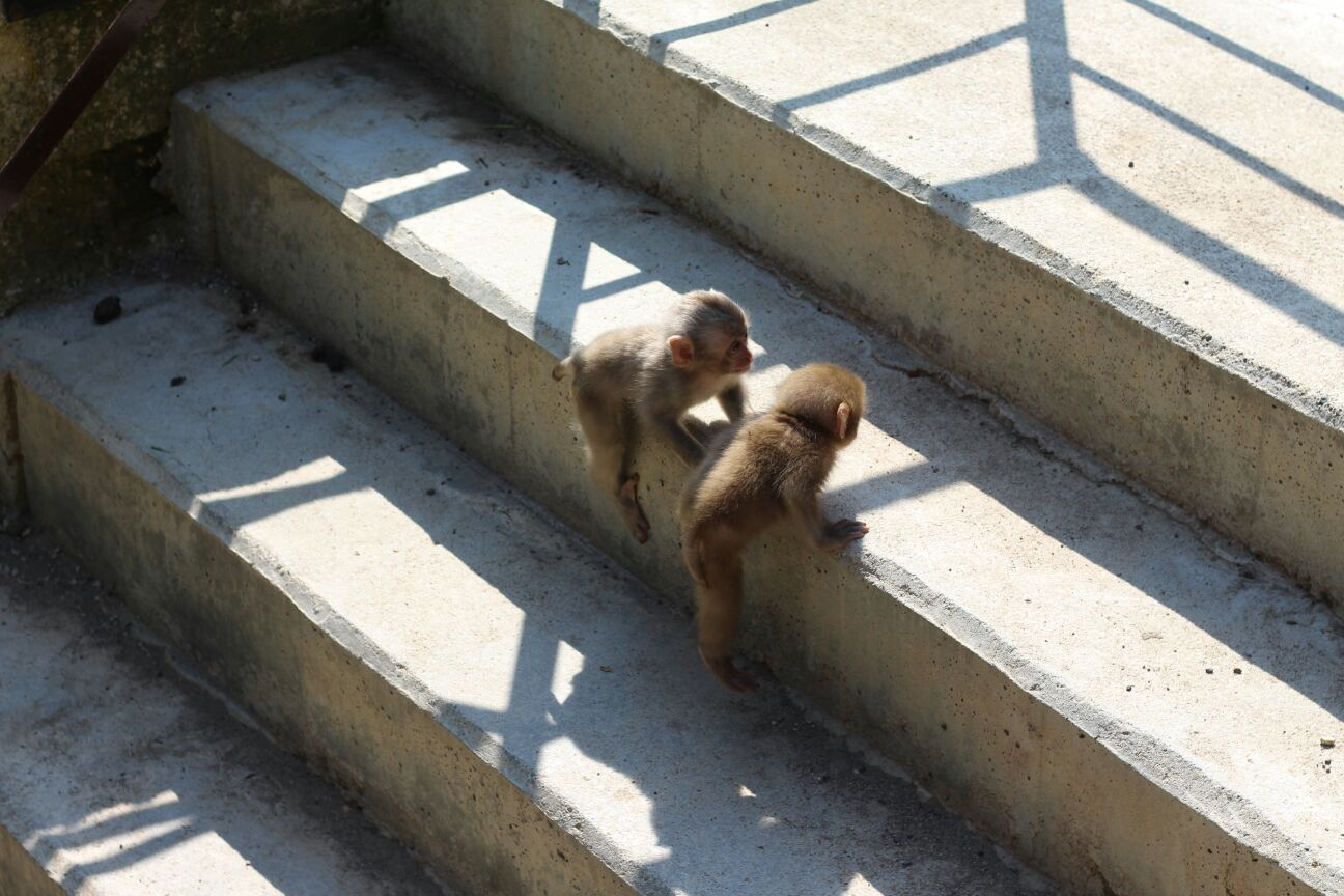 Baby Monkeys on stairs in Summer