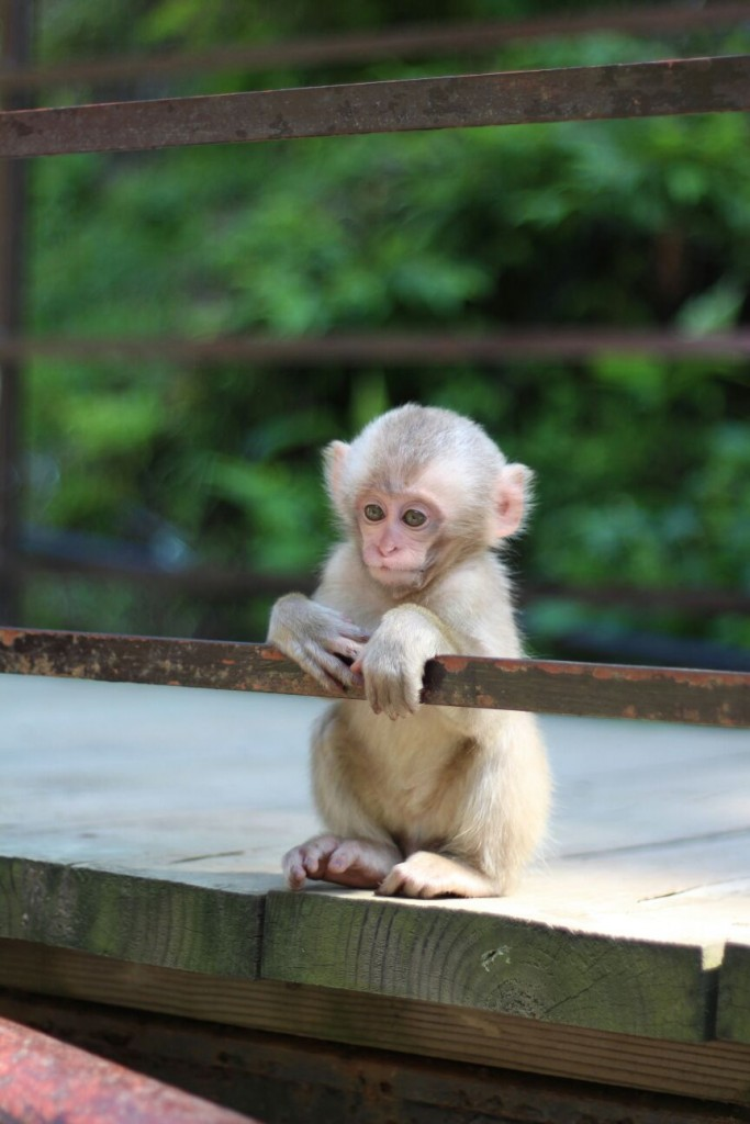 Baby Monkey in Summer