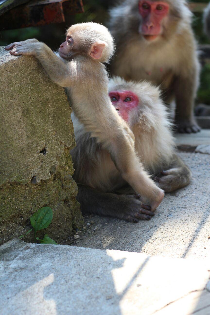 Adventurous Baby Monkey