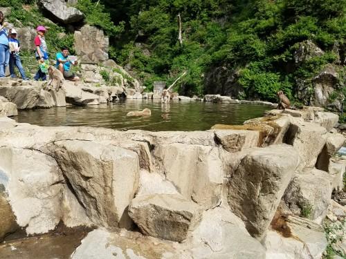 monkeys in the pool in summer