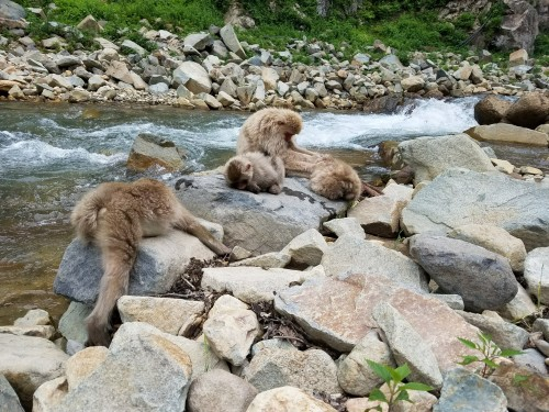 monkeys lounging by the river