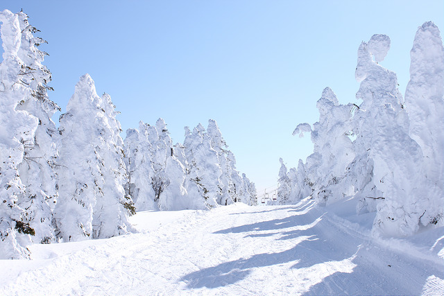 Shiga Kogen Winter trees ski slopes
