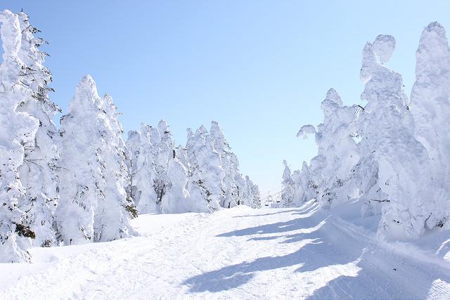 Shiga Kogen Winter trees ski slopes