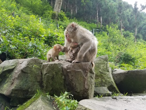 Monkey family of 4 2