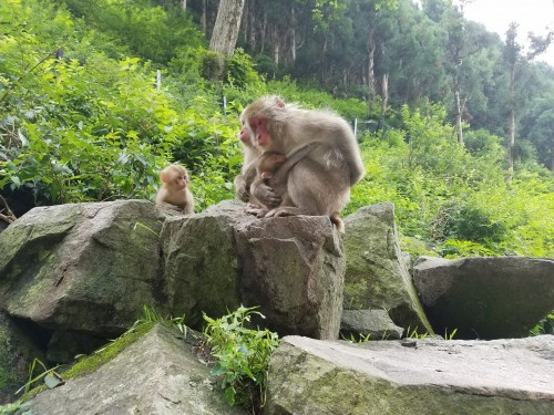 Monkey family of 4