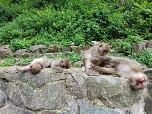 Monkey relaxing 2