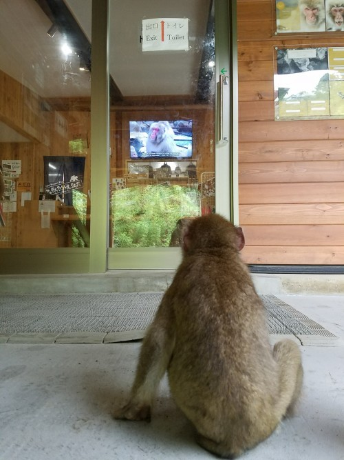 Monkey watching the exit