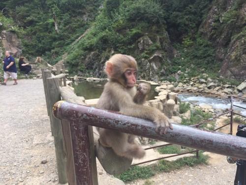 Monkey baby 2