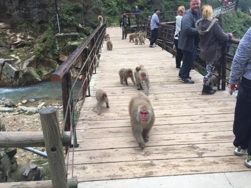 Monkey boss and monkey group