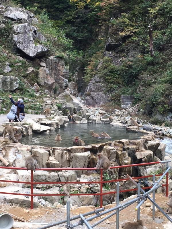Snow Monkey Park in AutumnS__13328439