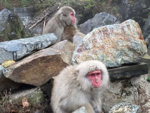 Monkey baby and momma