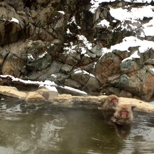 Monkeys in onsen 2