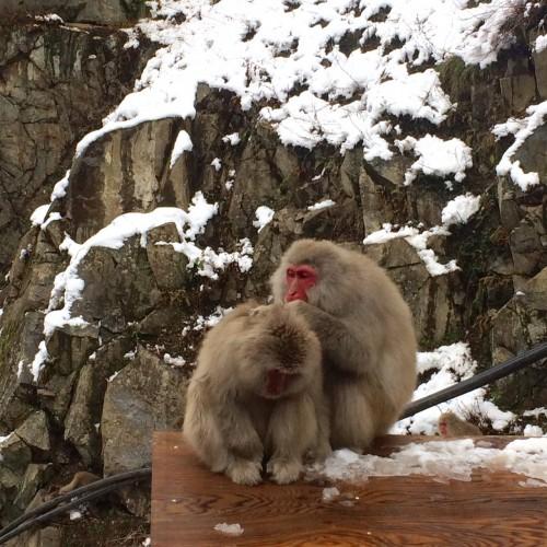 Monkeys on food box