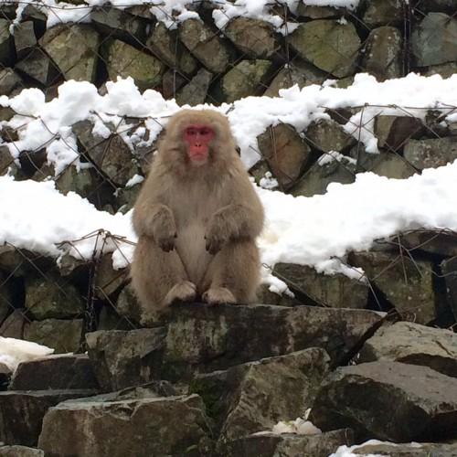Older Monkey on rock