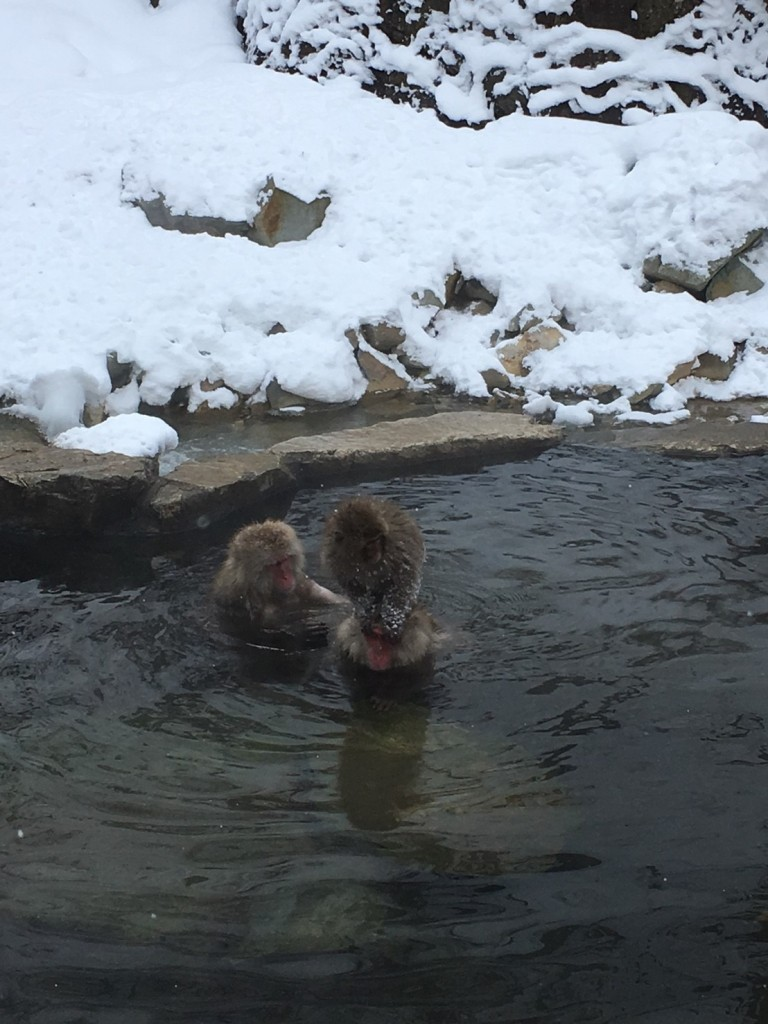 Snow Monkeys in january 3
