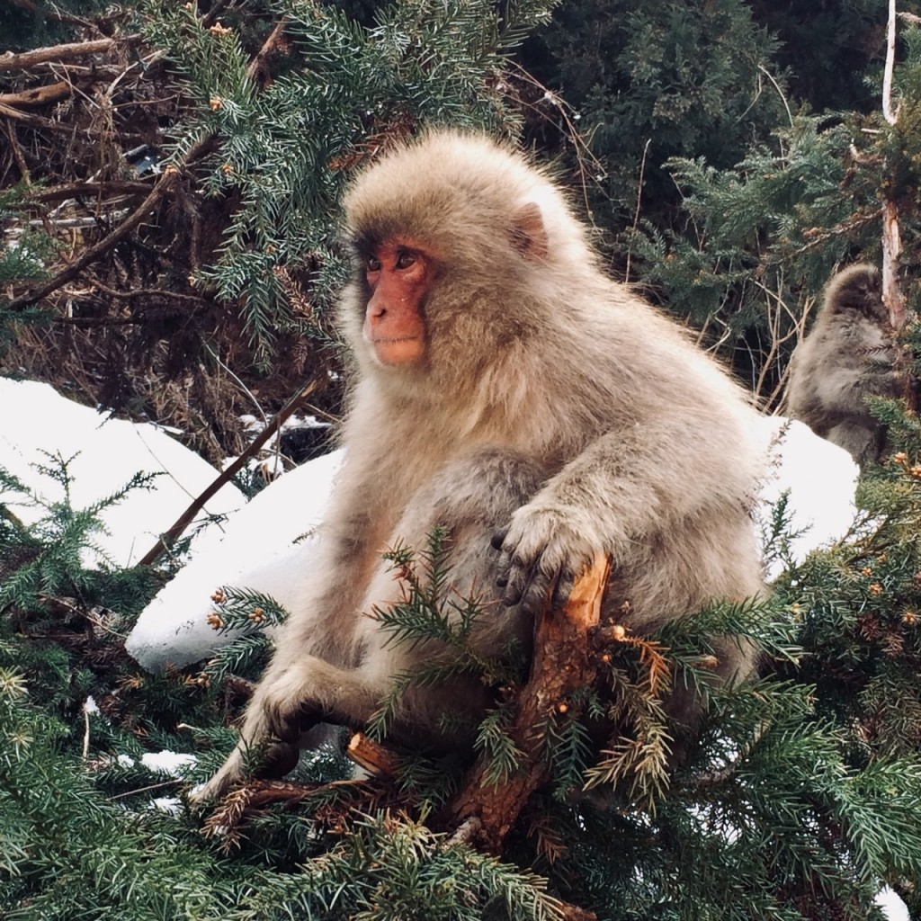 History of the Jigokudani Monkey Park