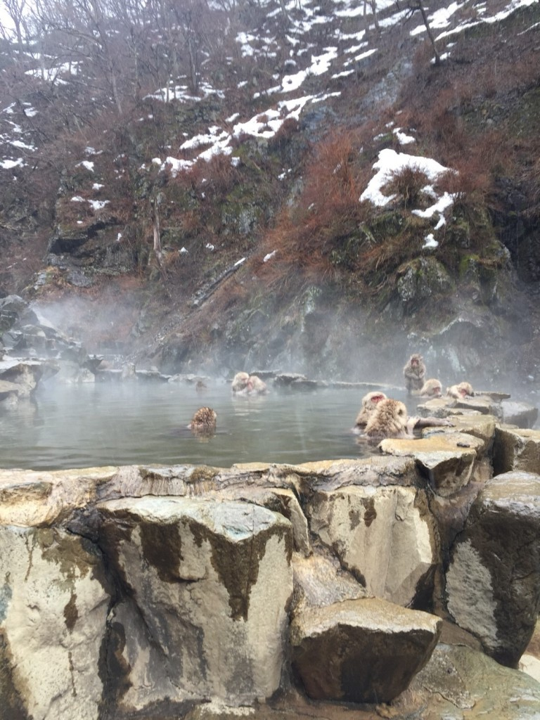 Snow Monkeys bathing in March 2