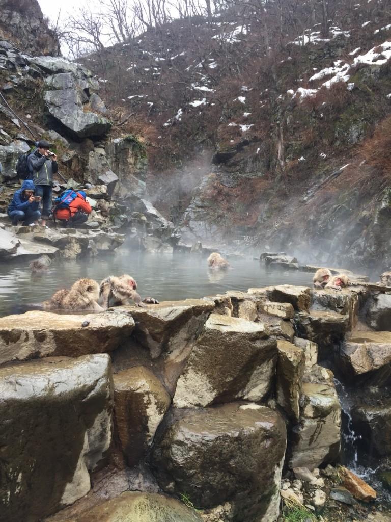 Snow Monkeys bathing in March